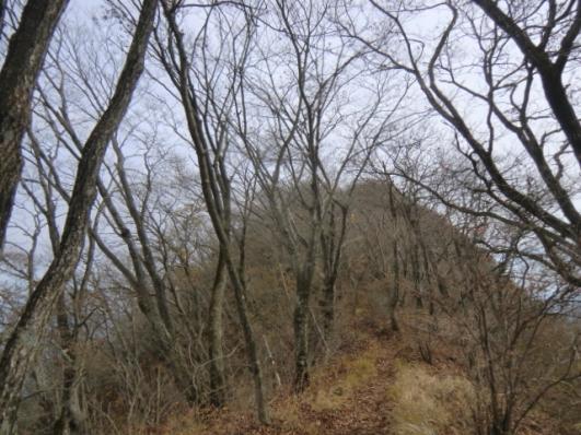 冬枯れの道を山頂へ