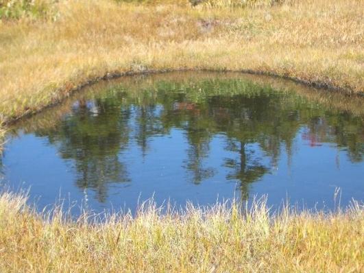 池塘に映る