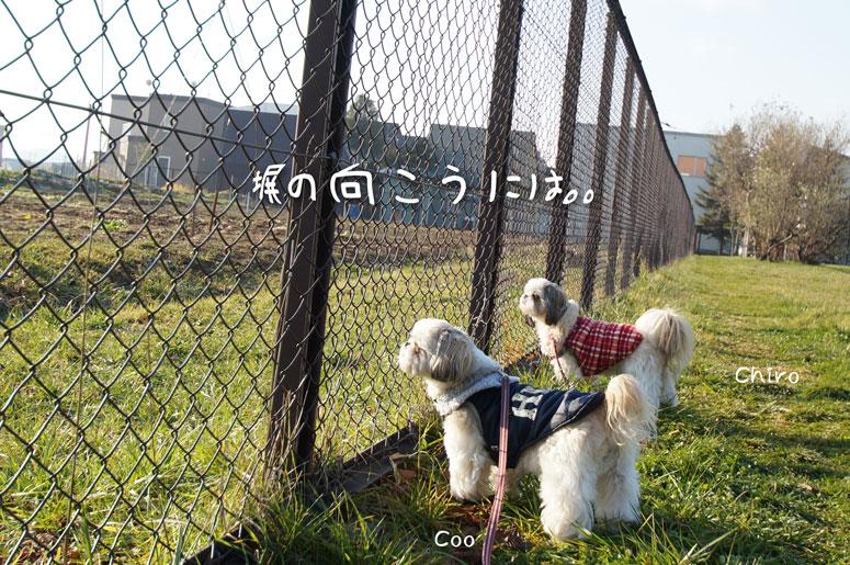 DSC00126_8096.jpg