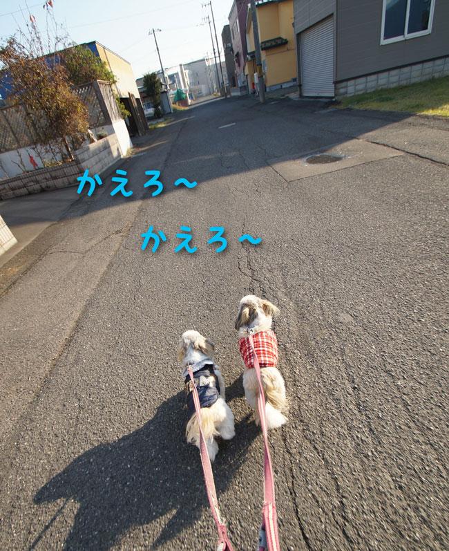 DSC00137_8102.jpg