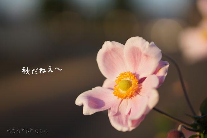 DSC01059_7110.jpg