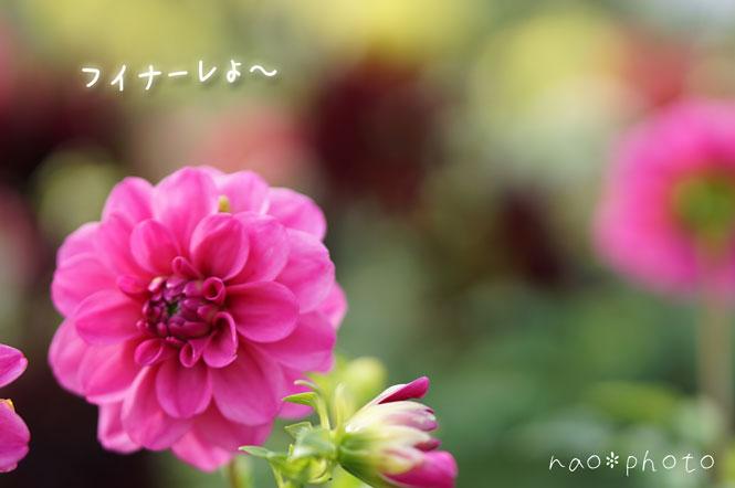 DSC01143_7124.jpg
