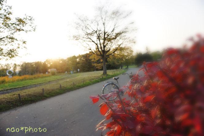 DSC01333_7248_edited-1.jpg