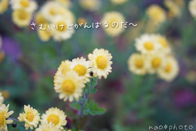 DSC01933_7783.jpg