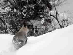 雪深い中を