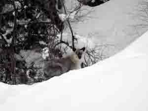 すっかり冬毛 カメラ目線