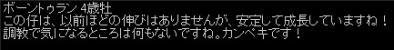 2010y11m20d_131530265.jpg