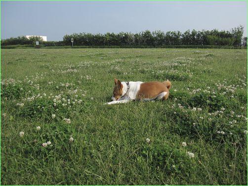 草のにおいっていいね。
