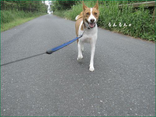 暑くないからお散歩にはちょうどいいけど。