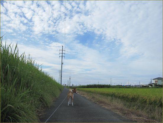 ディアンちゃんに会えると良いなの散歩道。