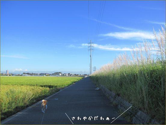 朝の散歩はl気持ちがいいです。