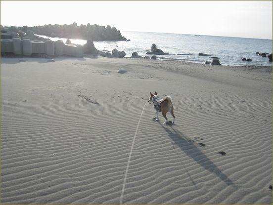 ケントだけの朝散歩