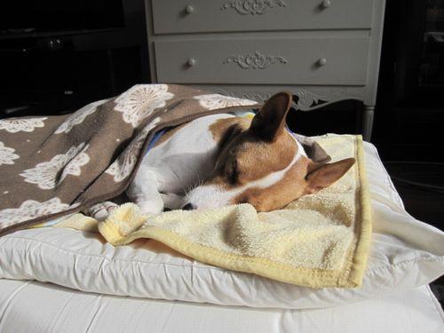 こんな感じで寝ています。