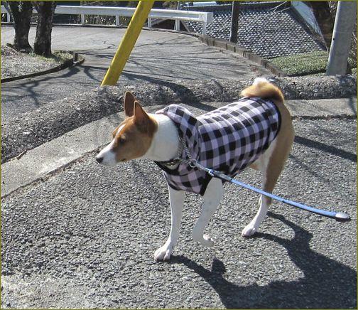 一張羅を着てお散歩終了。