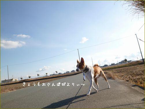 いつも変わらない散歩写真です。