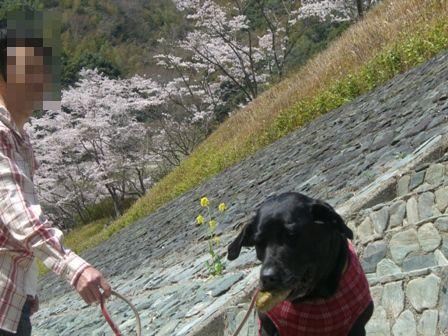 まーちゃんと桜ととーちゃん