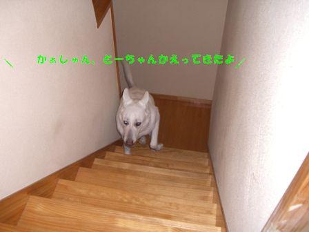CIMG0367-1.jpg