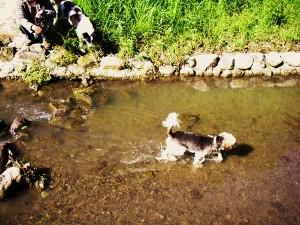 川で楽しむピピ!