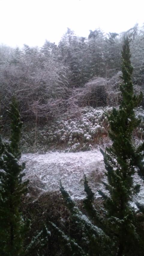 良い雪してんねサボテンね