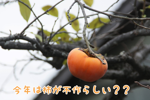IMG_0033_20101202113234.jpg