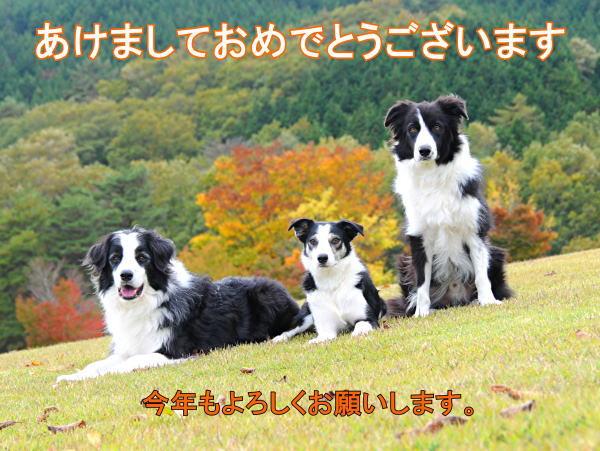 2012_nenga-01.jpg