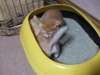 シーナと子猫 2