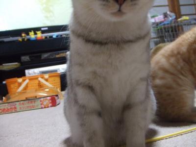 シーナと子猫 4