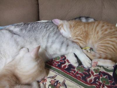 シーナと子猫 6