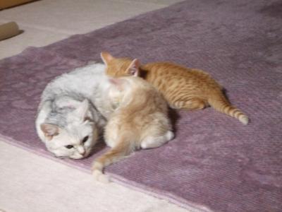 シーナと子猫 8