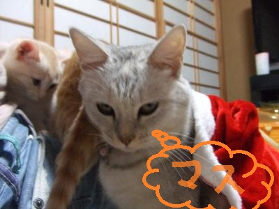 シーナと子猫 9