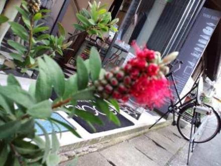 ウイズ田岡画材 ブラシの木