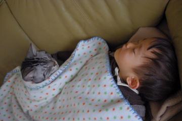 翌日、さすがに疲れてぽちと暴睡