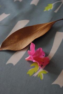 今日の葉っぱ