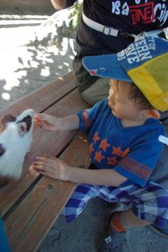 小動物大好き