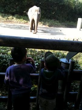 二人でゾウを見る