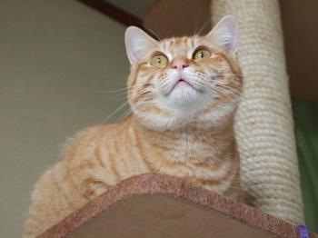 キラ猫だよ