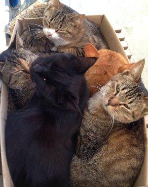 猫(4匹兄弟)