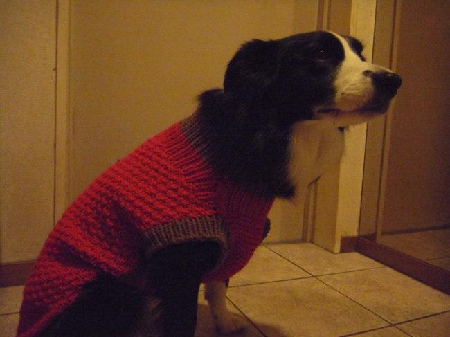 セーターできました