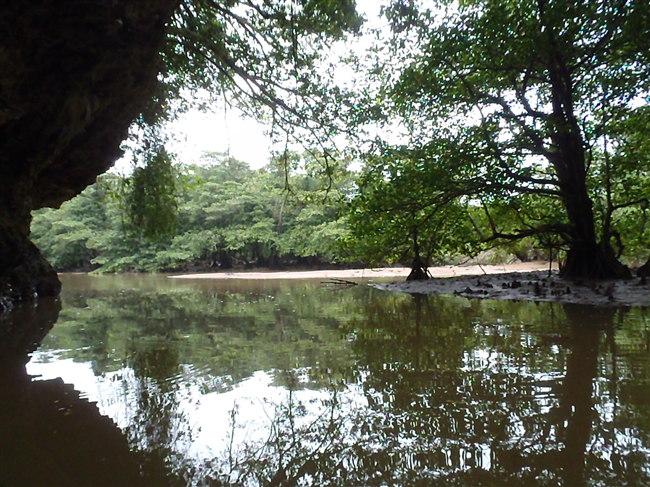 宮良川 マングローブ林