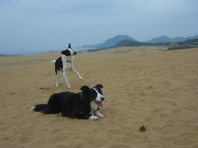 砂丘です。