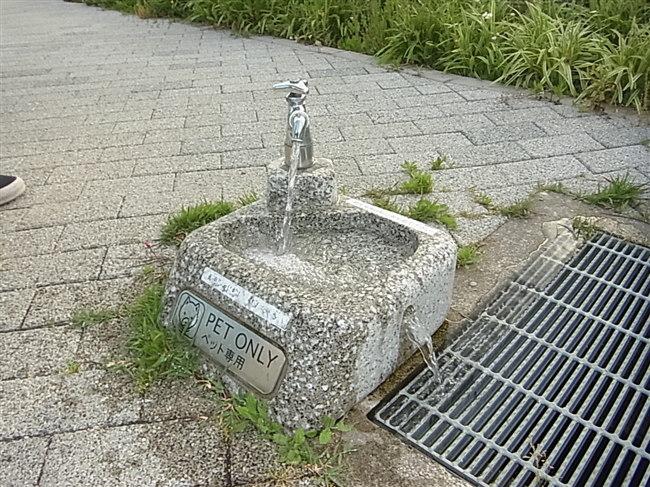 水飲み場1