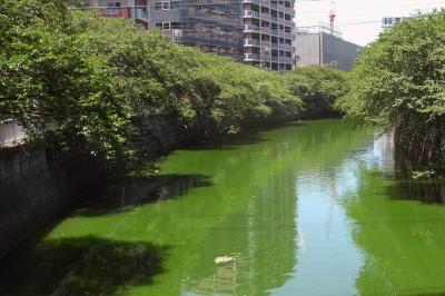 緑の目黒川_convert_20110713203733