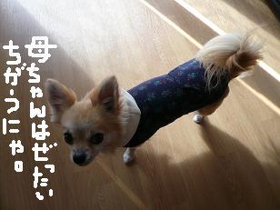 P1050695-deji.jpg
