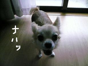 P1050711-deji.jpg