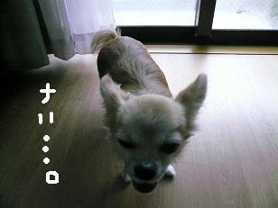 P1050712-deji.jpg