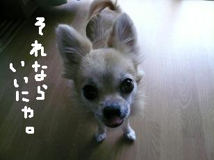 P1050720-deji.jpg