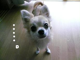 P1050726-deji.jpg
