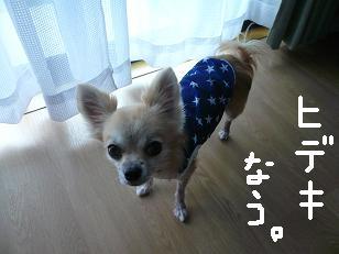 P1050895-deji-2.jpg