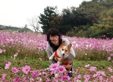 花さじき 7