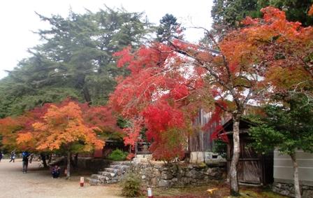 神護寺 5